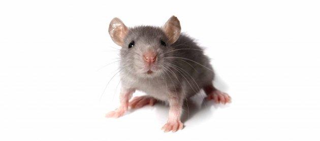 hiiru